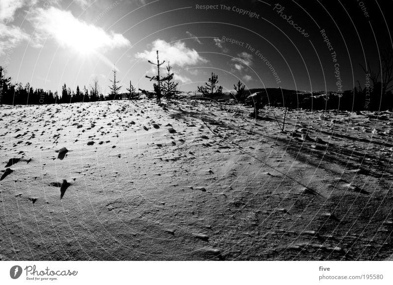 luosto Ferien & Urlaub & Reisen Ausflug Ferne Winter Schnee Winterurlaub Umwelt Natur Pflanze Baum Sträucher Wald Hügel Unendlichkeit kalt weiß Lappland