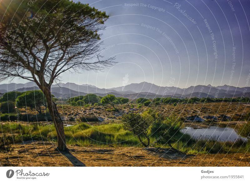 Baum inmitten einer Landschaft aus Sträuchern, Wasser und Bergen Pflanze Tier Himmel Horizont Sommer Schönes Wetter Gras Wildpflanze Berge u. Gebirge Flussufer