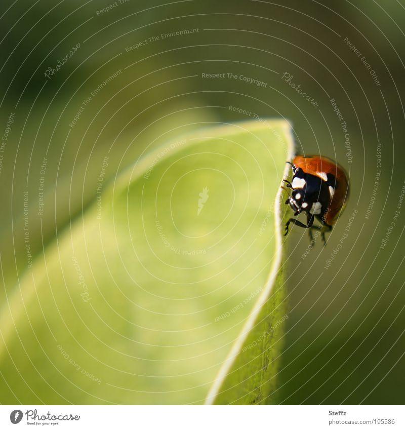 schräge Lage Natur grün Sommer Blatt Glück Beine gehen Zufriedenheit wandern Ecke Fitness festhalten Risiko hängen krabbeln Käfer