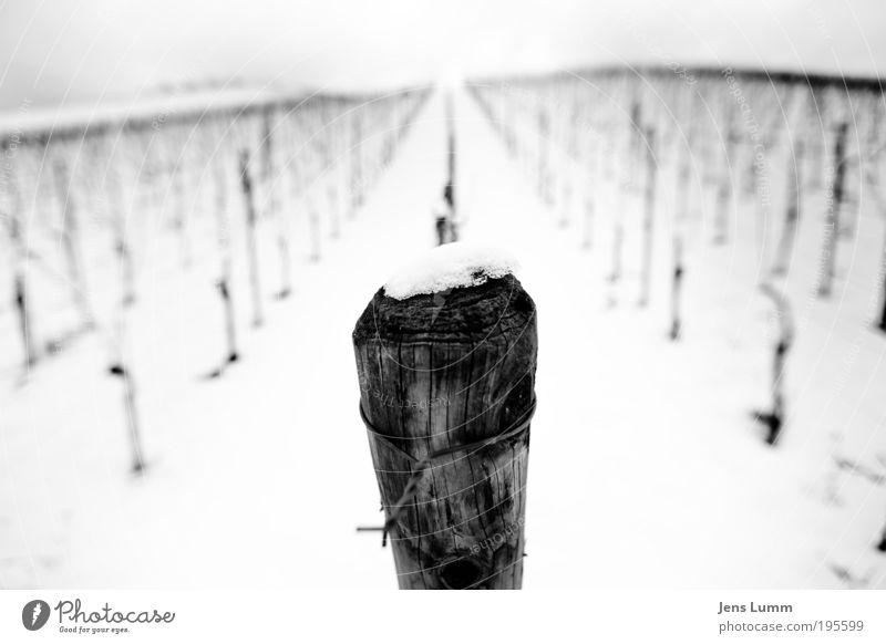 From Pole to Pole Landschaft Schnee Weinberg alt schwarz weiß Einsamkeit kalt regelmässig Fluchtpunkt Holz Strukturen & Formen Draht Stacheldraht trist Hügel