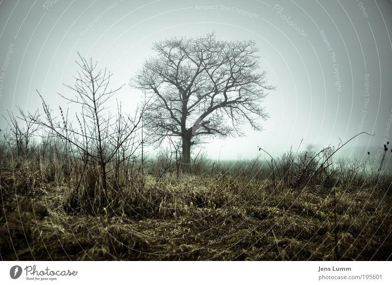 Solitary Tree Baum Winter Einsamkeit Wiese Tod Nebel trist Frost Ast Enttäuschung Vignettierung Endzeitstimmung