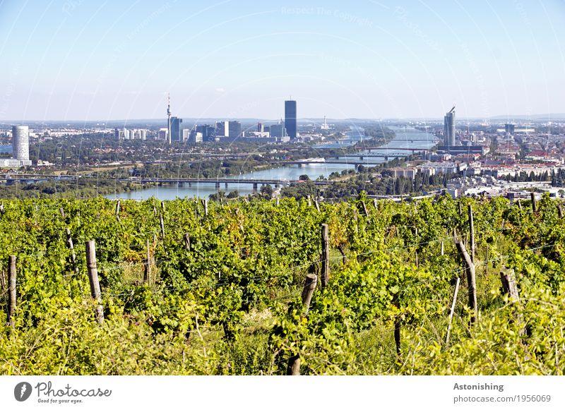 Blick auf Wien Umwelt Natur Landschaft Pflanze Luft Wasser Himmel Wolkenloser Himmel Horizont Sommer Wetter Schönes Wetter Sträucher Wein Flussufer Donau