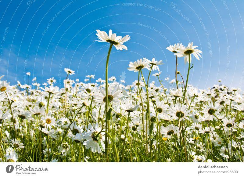 Picknick mit Aussicht Natur weiß Sonne Blume grün blau Pflanze Sommer Ferien & Urlaub & Reisen Wiese Gras Frühling Umwelt Horizont Ausflug Licht