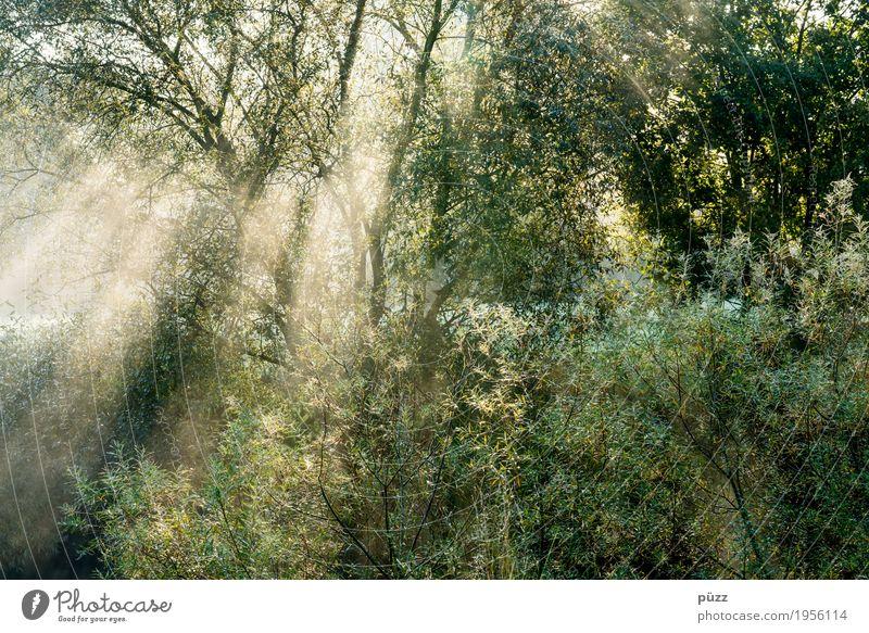 Licht Umwelt Natur Landschaft Pflanze Sonne Sonnenlicht Frühling Sommer Schönes Wetter Baum Sträucher Blatt Grünpflanze Wildpflanze Garten Park Wald leuchten