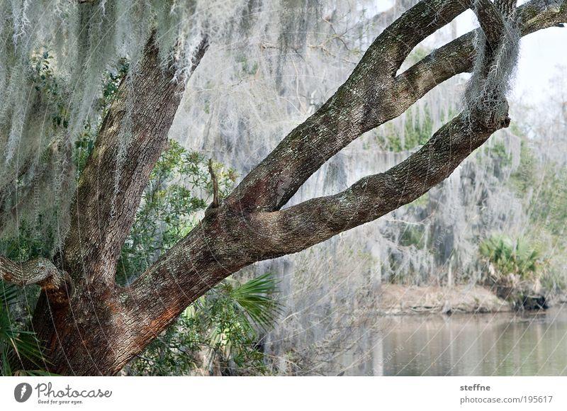 Weihnachtsbaum auf luisianisch Baum Wald Seeufer Flussufer Sumpf bayou New Orleans Luisiana USA außergewöhnlich Lametta HDR Farbfoto Gedeckte Farben