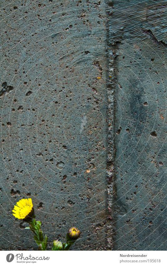 Mauerblümchen Natur Pflanze Umwelt Leben Frühling Blüte außergewöhnlich Wachstum Beton leuchten Dekoration & Verzierung Baustelle Blühend Bioprodukte Fasten