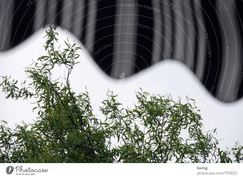 Meine besser nicht finalisierten Fotos Häusliches Leben Garten Schönes Wetter schlechtes Wetter Wind Sturm Baum Korkenzieher-Weide Park Balkon Terrasse Markise