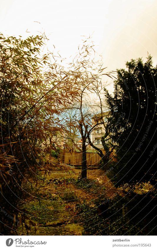Frühlingsgewitter Himmel Natur Baum Wolken Garten Gras Frühling Elektrizität Gewitter Spannung Märchen Gewitterwolken Bambus Religion & Glaube Vorsicht Hochspannung Eibe