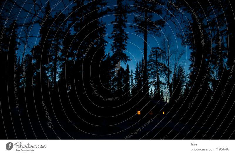 waldhütte Natur blau Baum Pflanze Ferien & Urlaub & Reisen Winter Ferne Wald dunkel Fenster Landschaft Ausflug Häusliches Leben gruselig Skandinavien Finnland