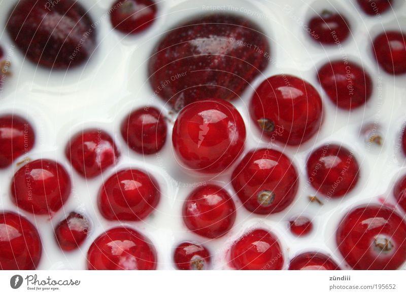 Beerensucht weiß rot ruhig Ernährung Leben Gesundheit Lebensmittel Frucht frisch süß lecker Milch saftig Getränk Dessert