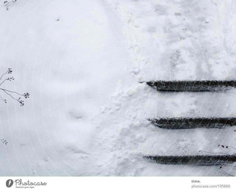 Berlin. Der Winter hat erneut die halbe Stadt lahm gelegt ... Pflanze Winter kalt Schnee Eis Beton Treppe Sträucher Spuren Zweig parallel ungemütlich