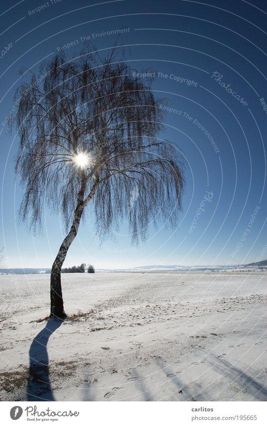Palmenstrand Landschaft Himmel Sonne Winter Klima Schönes Wetter Eis Frost Schnee Baum Birke Feld glänzend hell kalt blau weiß blenden Trauer hängen lassen