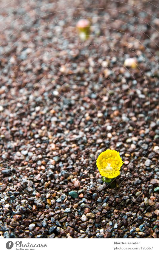 Auch wenn Ihr noch mehr über mir ausschüttet.... Natur Pflanze Umwelt Frühling Sand außergewöhnlich Kraft Erfolg Wachstum frisch Zeichen Blühend Kräuter & Gewürze Bioprodukte bizarr Fasten