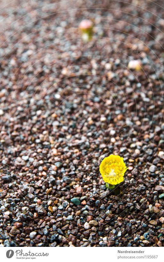 Auch wenn Ihr noch mehr über mir ausschüttet.... Natur Pflanze Umwelt Frühling Sand außergewöhnlich Kraft Erfolg Wachstum frisch Zeichen Blühend