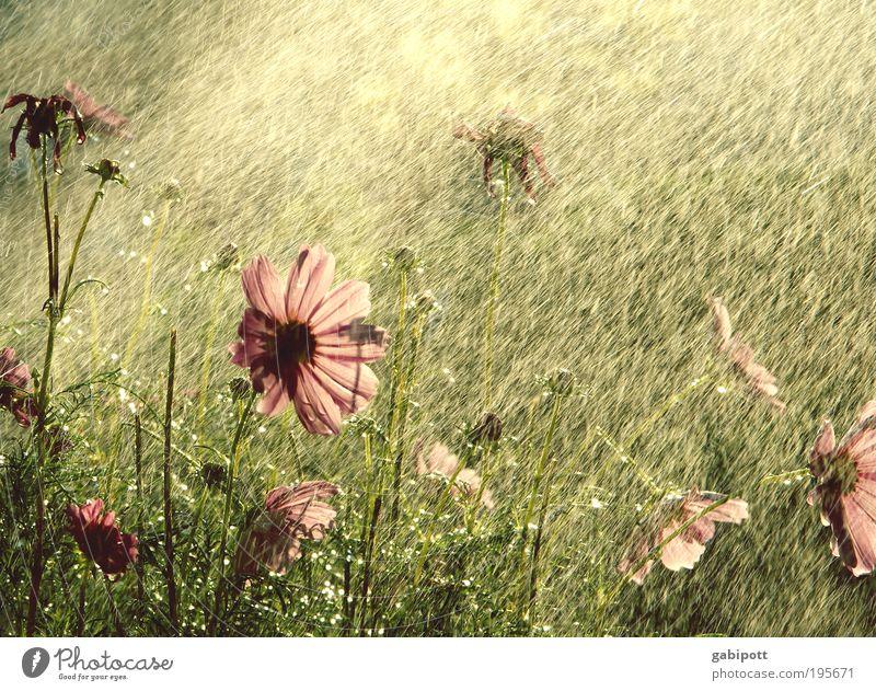 100 Blüten... Natur schön Pflanze Sommer Blume Leben Landschaft Gras Glück Garten Park Regen Zufriedenheit Wassertropfen Fröhlichkeit Sträucher