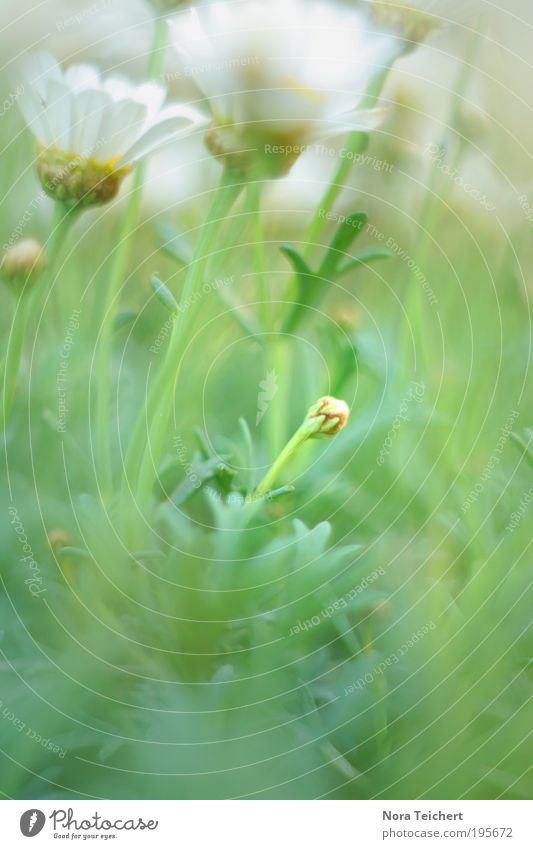 Spring Natur schön Blume Pflanze Sommer Freude Blatt Tier Blüte Frühling Glück träumen Park Landschaft Wetter Umwelt