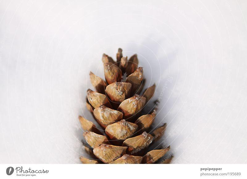 Eiszapfen Pflanze Winter Schnee Bewegung Park Eis Zufriedenheit braun Frost Duft Niederschlag Natur Tannenzapfen