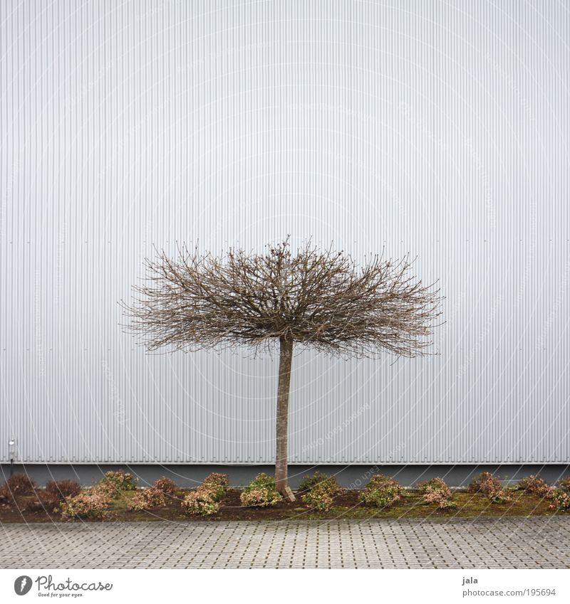 Baum Baum Pflanze Haus Wand Garten Mauer Gebäude Fassade Sträucher einfach