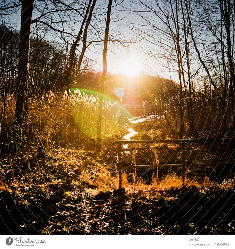 Gelände Natur Pflanze Wasser Baum Landschaft ruhig Winter Wald Umwelt natürlich Holz Metall Horizont leuchten glänzend Luft