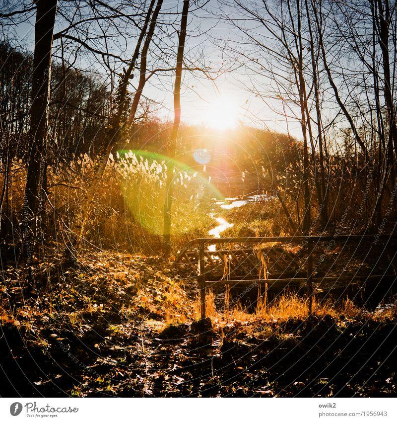 Gelände Umwelt Natur Landschaft Pflanze Luft Wasser Wolkenloser Himmel Horizont Winter Schönes Wetter Baum Sträucher Ranke Röhricht Zweige u. Äste Wald Bach