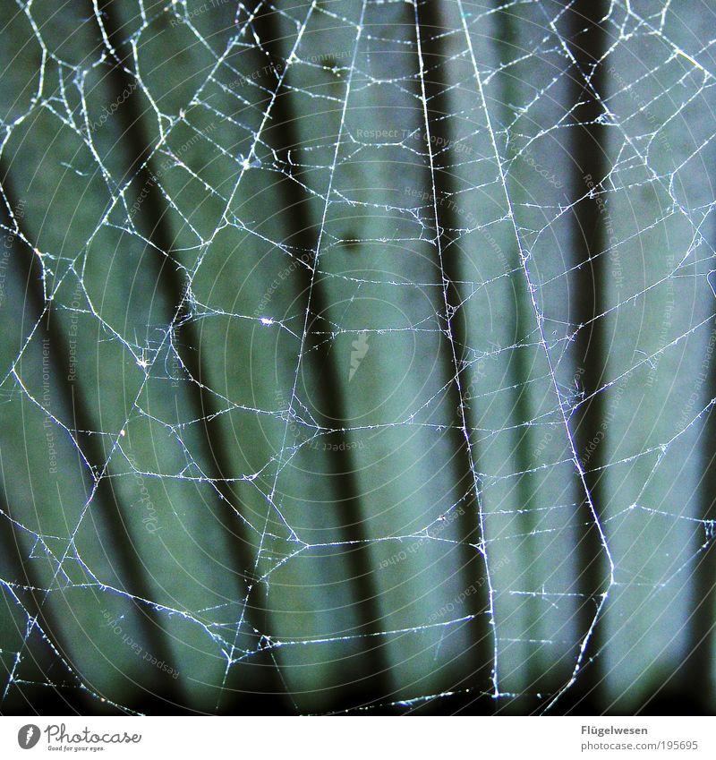 Die spinnen die Spinnen Tier dunkel Lifestyle Sicherheit Dach bedrohlich Netz Schutz fangen atmen Geborgenheit Haustier Spinnennetz Spinnenbeine