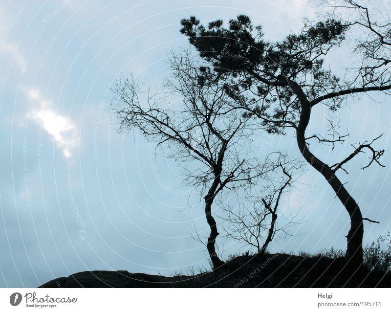 krumm und schief.... Umwelt Natur Landschaft Pflanze Himmel Wetter Baum Sträucher Felsen alt stehen dehydrieren Wachstum ästhetisch außergewöhnlich dunkel hoch