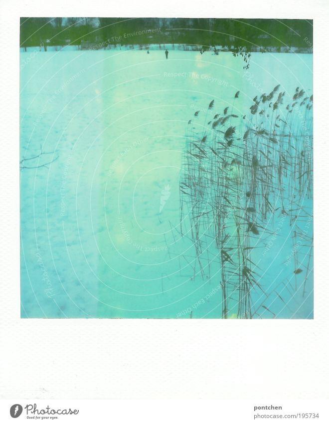 Polaroid zeigt einen zugefrorenen See mit schlittschuhfahrern Freizeit & Hobby Schlittschuhlaufen Winter Schnee Winterurlaub Schlittschuhe Mensch Natur Pflanze