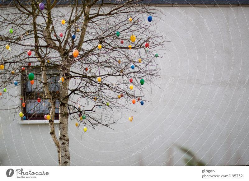 Ostergruß Dekoration & Verzierung Feste & Feiern Ostern Frühling Baum Haus Mauer Wand Fassade Fenster Glaube mehrfarbig Zweige u. Äste Gardine Birke