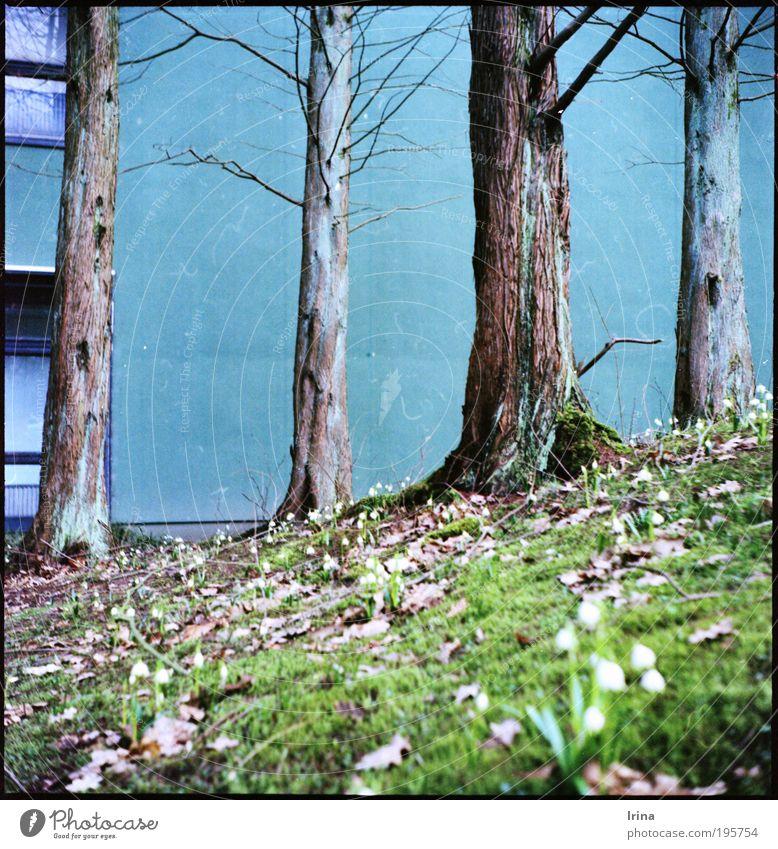 Aufstieg Pflanze Bochum Studium Mauer Wand Fenster Beton blau braun grau grün jade analog Außenaufnahme Menschenleer Froschperspektive