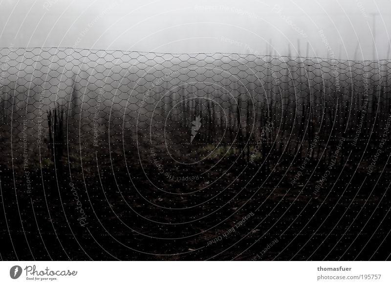 Karfreitag - Perlen im Maschendraht Himmel Natur weiß schwarz Tod dunkel kalt grau Traurigkeit träumen Stimmung braun Feld Nebel nass Wassertropfen