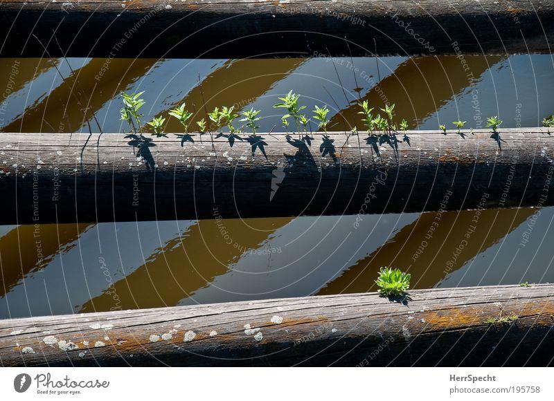 Kleines Biotop Natur Wasser Baum grün Pflanze Sommer Leben Holz grau braun Hoffnung Wachstum Fluss Baumstamm Schönes Wetter Flussufer