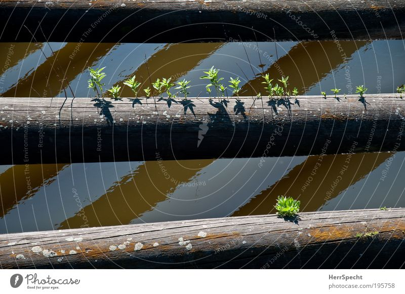 Kleines Biotop Pflanze Wasser Sommer Schönes Wetter Baum Grünpflanze Flussufer Holz Wachstum braun grau grün Hoffnung Leben Natur zartes Grün sprießen