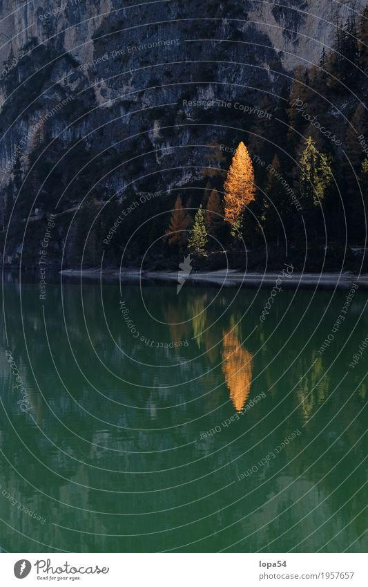 Herbstliche Spiegelung am Pragser Wildsee, Dolomiten, Südtirol Umwelt Natur Landschaft Pflanze Wasser Sonnenlicht Schönes Wetter Baum Lärche Wald Felsen Alpen