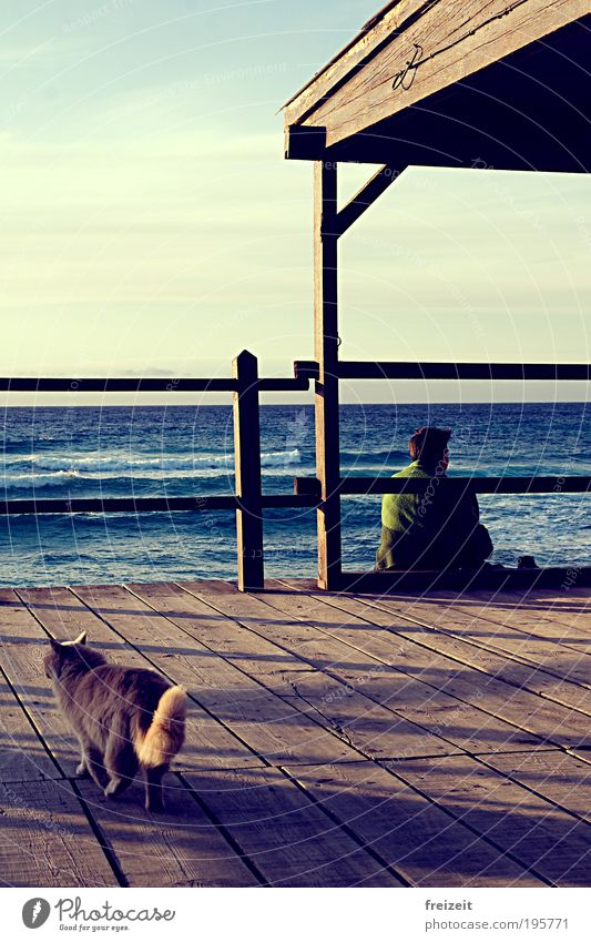 Ein Haus am Meer Katze Ferien & Urlaub & Reisen Tier ruhig Erholung Holz Glück Küste Wellen authentisch nachdenklich einfach Denken Fernweh Geborgenheit
