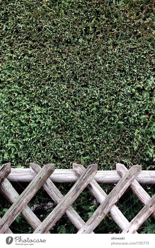 Gartenbaukunst Natur grün Pflanze Holz Park Umwelt Sicherheit Ordnung Sträucher Schutz Sauberkeit Kreuz Zaun stachelig gehorsam