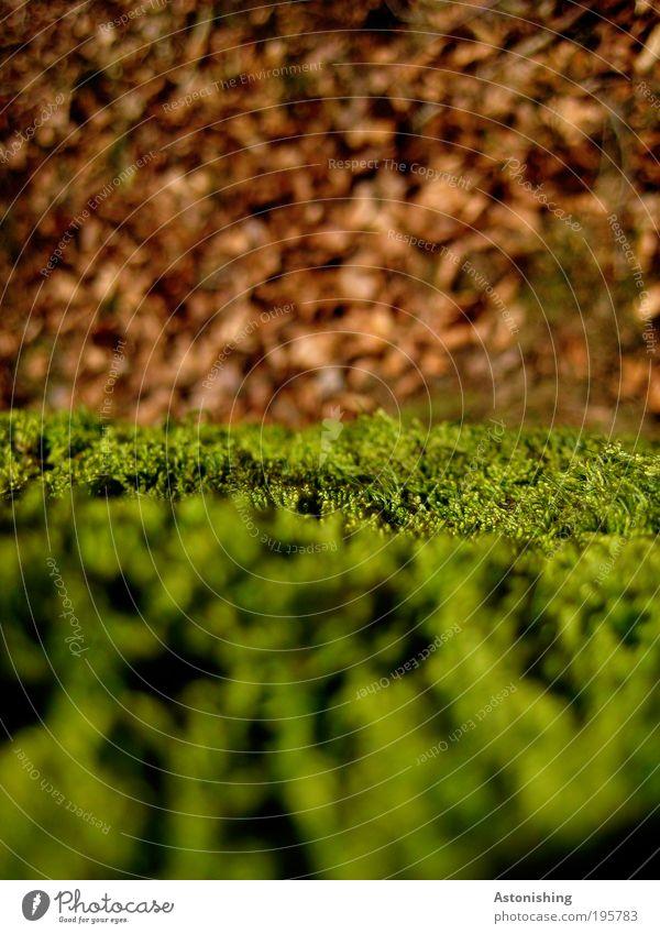 Moos Umwelt Natur Landschaft Pflanze Erde Frühling Schönes Wetter Wärme Sträucher Blatt Hügel braun grün Mühlviertel Farbfoto mehrfarbig Außenaufnahme