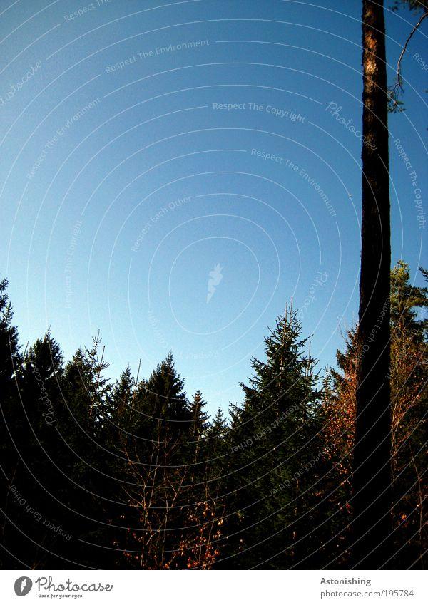 ,,,,,|, Umwelt Natur Landschaft Pflanze Himmel Wolkenloser Himmel Sommer Wetter Schönes Wetter Baum Sträucher Moos Blatt Grünpflanze Nutzpflanze Wildpflanze