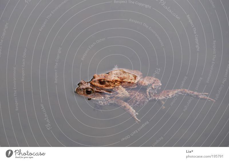 Rettungsschwimmer Tier Tierpaar Schwimmen & Baden Im Wasser treiben Frosch Fortpflanzung