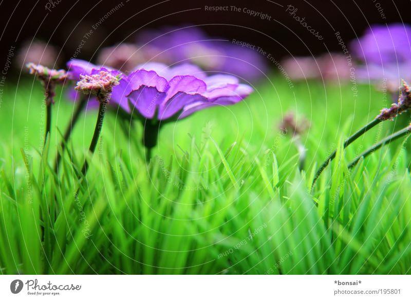 frohe ostern, dicke eier! Natur Blume grün Leben Wiese Blüte Gras Frühling Energie frei frisch Fröhlichkeit Wachstum violett Dekoration & Verzierung