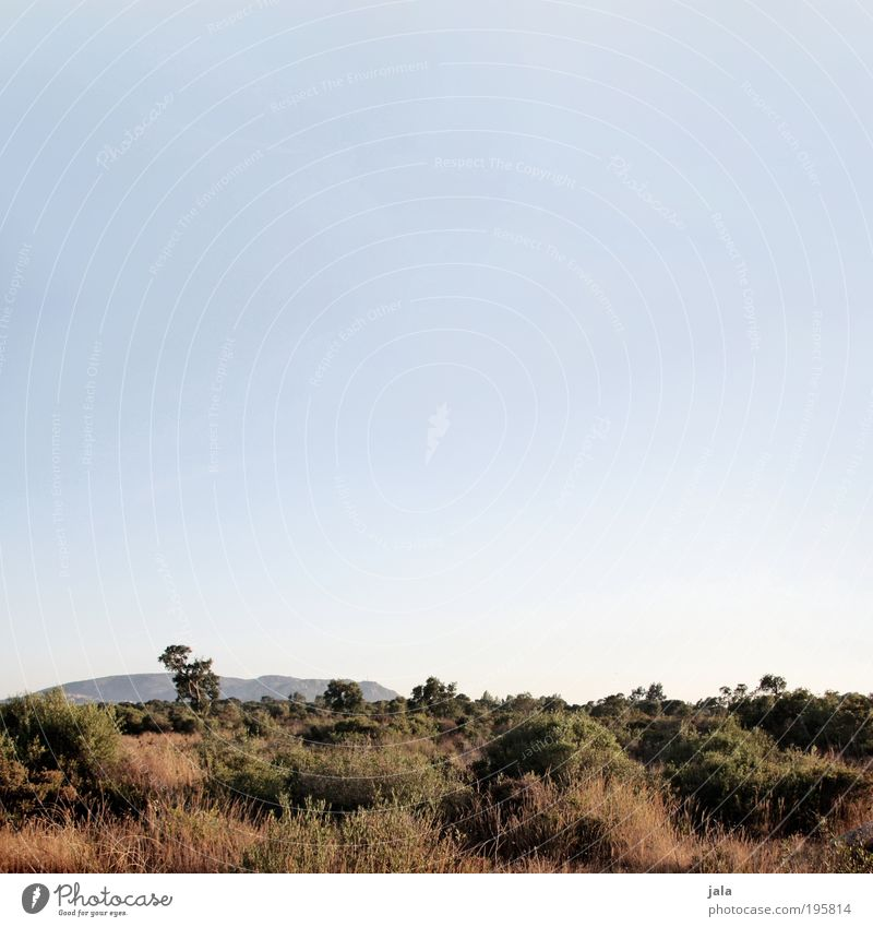 Landschaft Natur Himmel Baum Pflanze Sommer Einsamkeit Erholung Gras Zufriedenheit Kraft Umwelt groß Sträucher beobachten wild