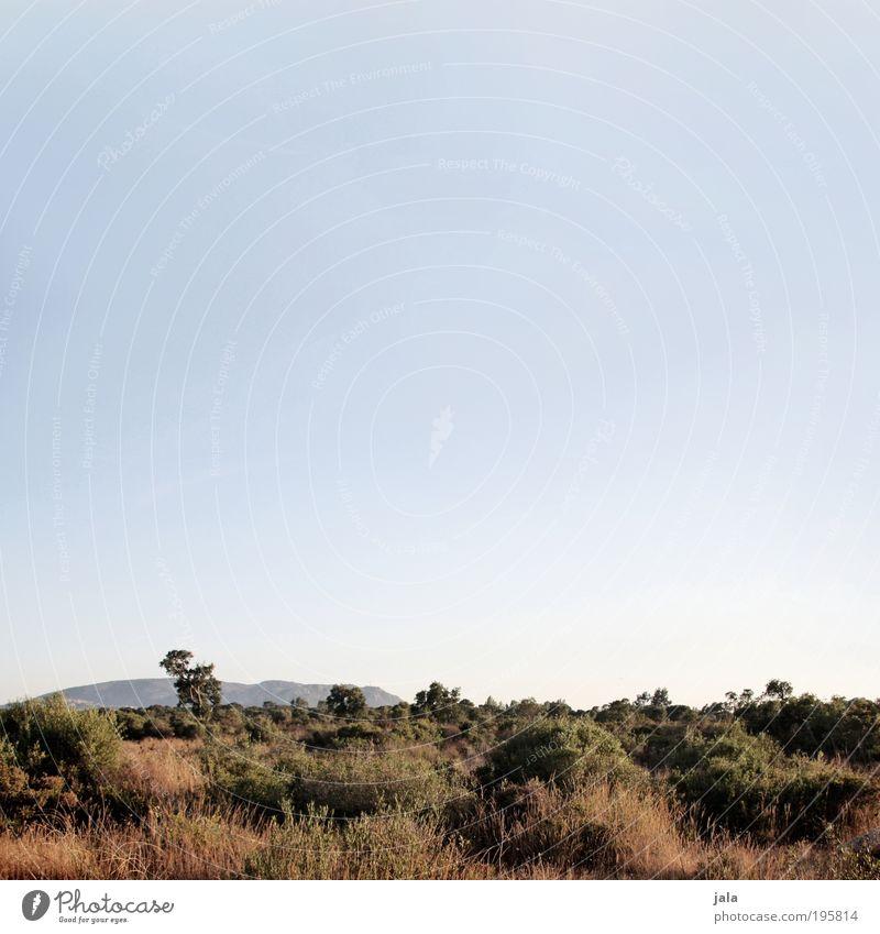 Landschaft Natur Himmel Sommer Pflanze Baum Gras Sträucher Hügel beobachten genießen Blick groß Unendlichkeit trocken wild Zufriedenheit Einsamkeit Erholung