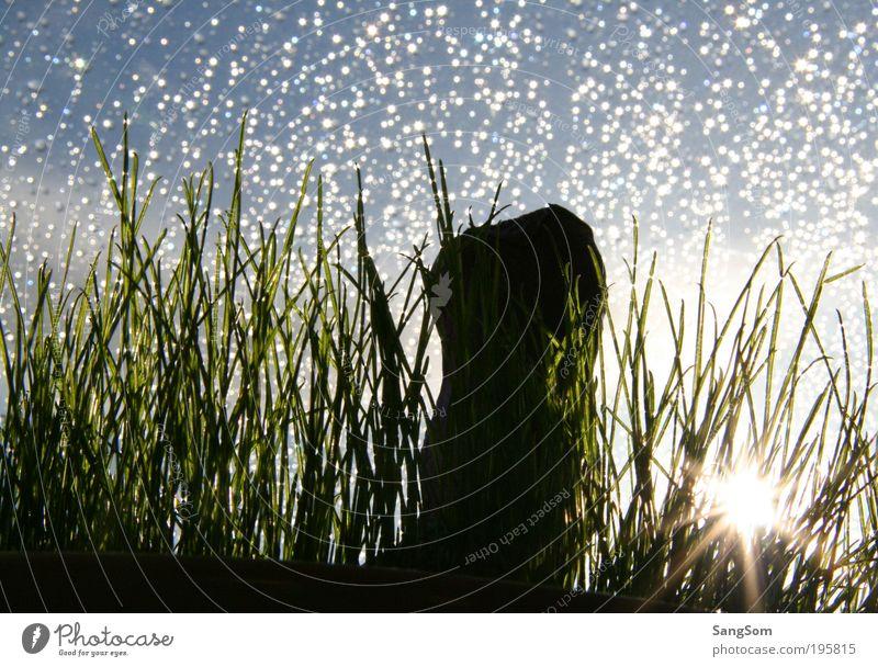 Frohe Ostern Himmel Sonne Gras Frühling Regen Wassertropfen einfach Tropfen Umwelt Niederschlag