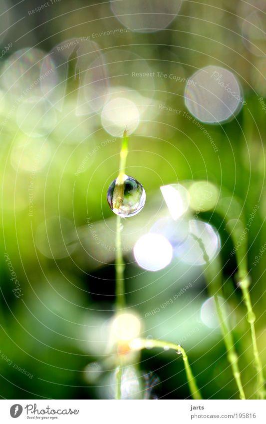 kleine Erfrischung Umwelt Natur Wasser Wassertropfen Sonnenlicht Frühling Sommer Klima Wetter Schönes Wetter Gras Moos Wiese hell nass natürlich rund grün
