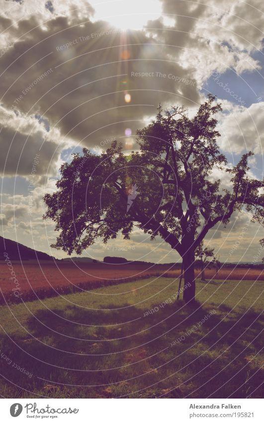...stand ein schattiger Apfelbaum. Ferien & Urlaub & Reisen Freiheit Sonne Natur Landschaft Wolken Sonnenlicht Sommer Herbst Baum Garten Wiese Feld Singen