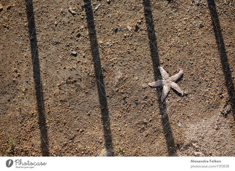Hinter Gittern Strand Einsamkeit Tier Sand einfach Justiz u. Gerichte Justizvollzugsanstalt Politik & Staat Gitter stachelig Küste Strandgut einsperren Seestern Meeresboden Strafvollzug