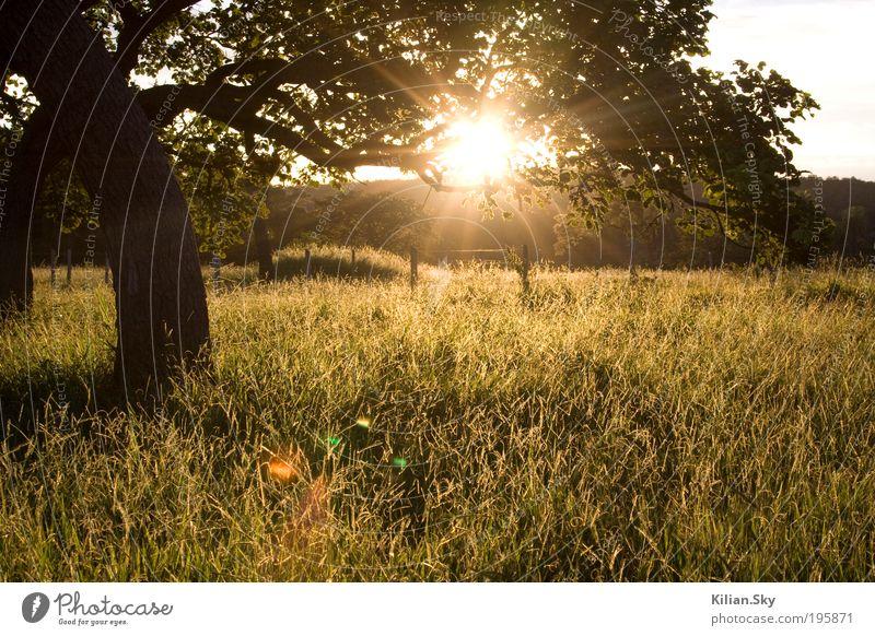 Licht am Horizont Natur Ferien & Urlaub & Reisen Baum Sonne Sommer ruhig Erholung Ferne Landschaft Wiese Herbst Gras Frühling Freiheit Zufriedenheit Klima