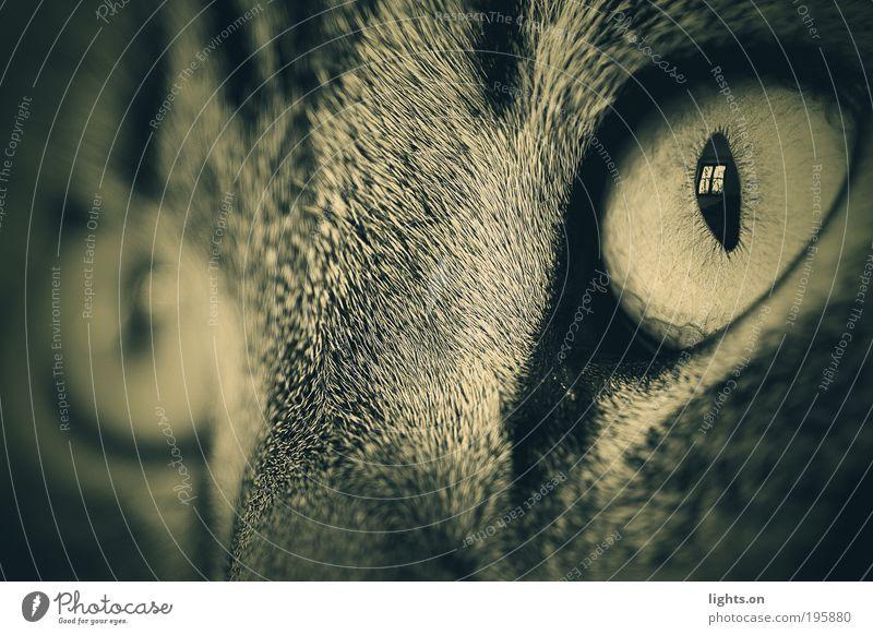 Fensterblick Katze Tier ruhig Ferne Erholung Leben Gefühle klein Denken Tierjunges Kraft glänzend frei Fröhlichkeit niedlich weich