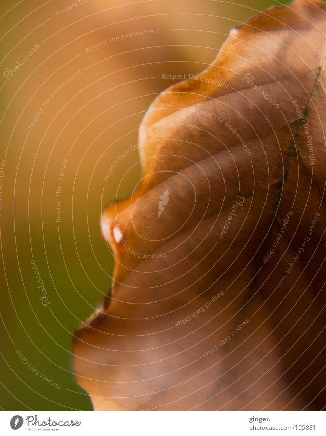 Vergangenes ein wenig festhalten... Natur grün Blatt Umwelt Tod Herbst Linie braun Warmherzigkeit Sträucher Schönes Wetter Vergänglichkeit Trennung vertrocknet