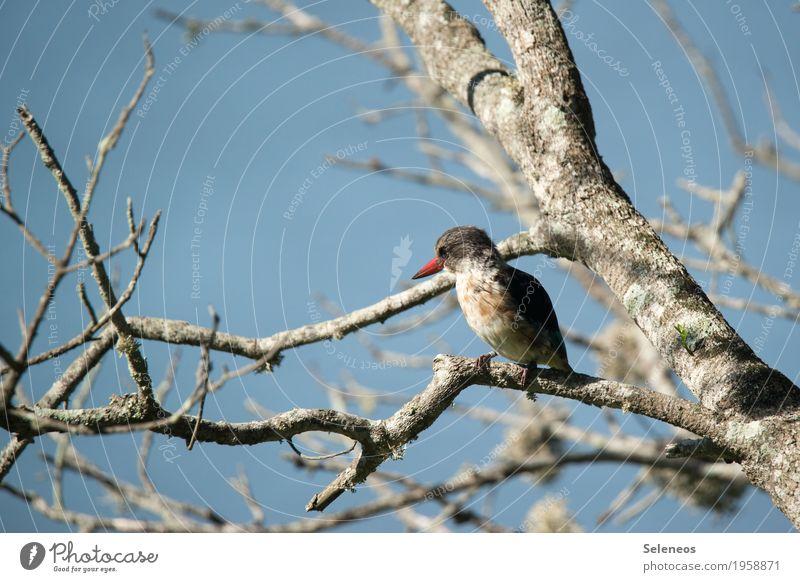 Braunkopflist Natur Baum Tier Winter Umwelt Herbst natürlich Vogel Wildtier nah Tiergesicht Schnabel Eisvögel