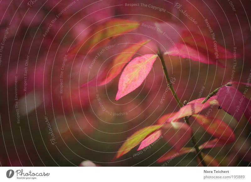 i.love.sun. Umwelt Natur Landschaft Pflanze Tier Frühling Sommer Klima Klimawandel Wetter Schönes Wetter Baum Blume Sträucher Ast Zweig Park Blühend leuchten
